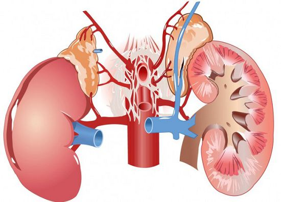 Лечение амилоидоза