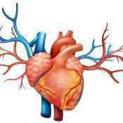 Сколько живут с ишемической болезнью сердца