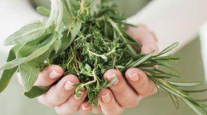 Травы, повышающие давление