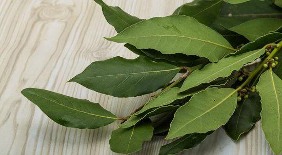 Лечение цистита лавровым листом