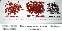 Что такое ягоды годжи и как их отличить от барбариса?