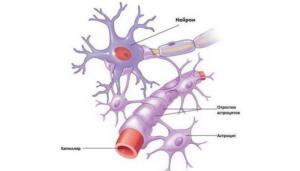 Астроциты головного мозга
