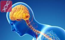 Галлюцинации при болезни Паркинсона