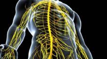 Ганглии нервной системы