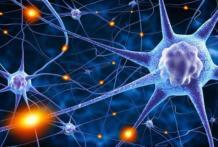 Нейрофизиология — это что такое?