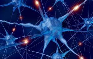 Нейрофизиология головного мозга