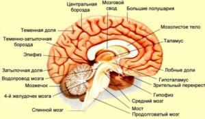 Синдром Герстманна-Штреусслера-Шейнкера: причины
