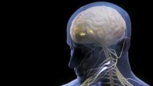 Гипоксия и нервная система