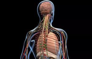 Профилактика нервной системы