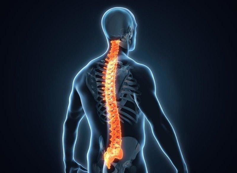 Позвоночник и нервная система