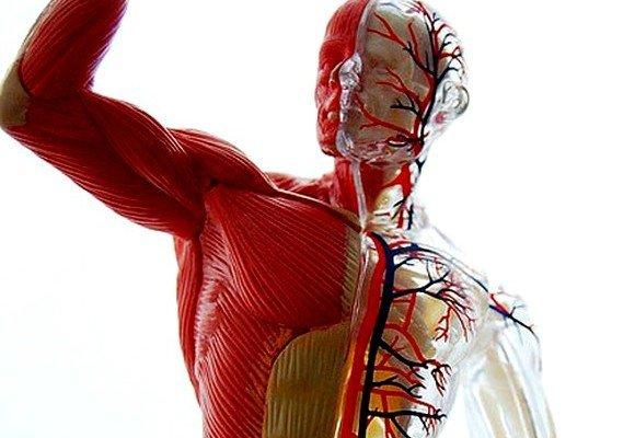 Повышенный тонус мышц