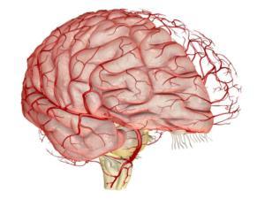 Поражение головного мозга и его причины