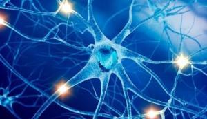 Центральная нервная система и мозг
