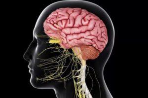 Кортикобазальная дегенерация головного мозга: симптомы и лечение