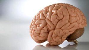 Головной мозг и его функции