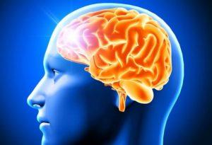Кора головного мозга: строение