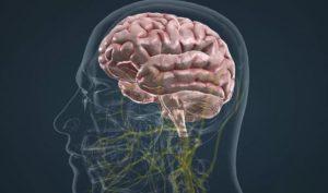 Кора головного мозга: причины