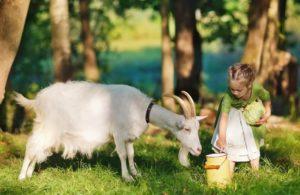Энцефалит и козье молоко