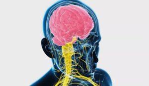 Сифилис нервной системы: этапы развития