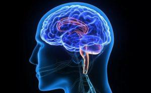 Сифилис нервной системы - причины