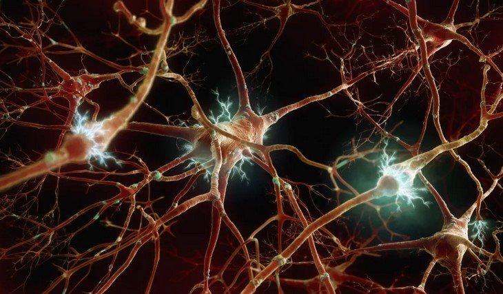 Черепно-мозговые нервы и их поражение