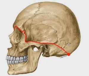 Выход черепно-мозговых нервов