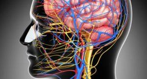 Профилактика заболеваний нервной системы