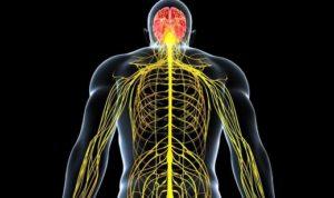 Профилактика заболеваний нервной системы и ее особенности