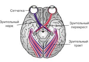 Зрительные нервы