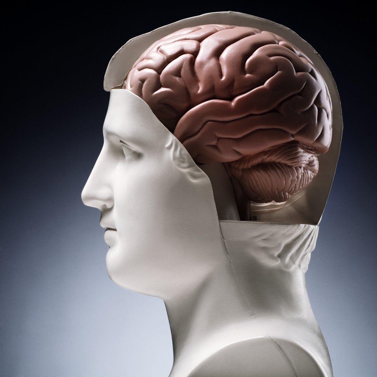 Воспаление мозга почему происходит