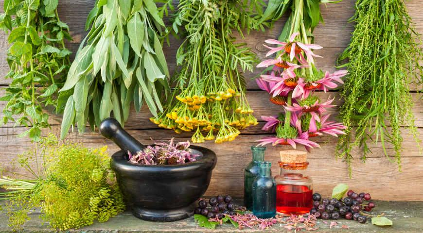 Лекарственные растения – панацея или пережиток прошлого